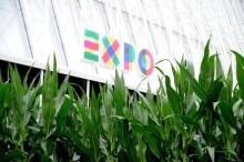 Expo: un campo di mais nel centro di Milano